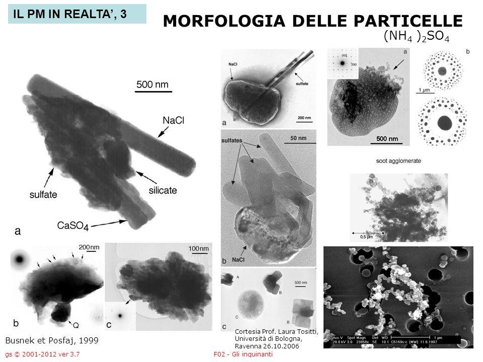 MORFOLOGIA DELLE PARTICELLE