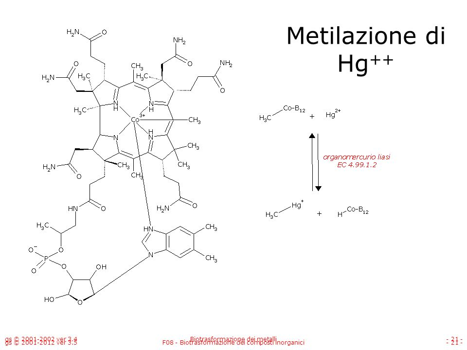 Metilazione di Hg++ 21 gs © 2001-2002 ver 3.4