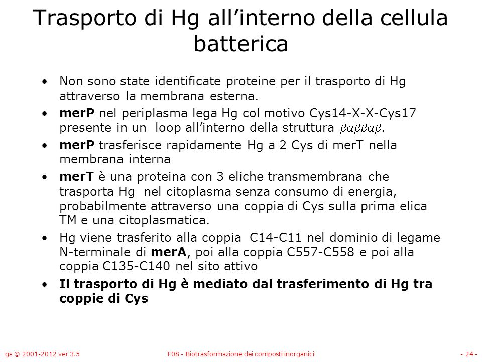 Trasporto di Hg all'interno della cellula batterica