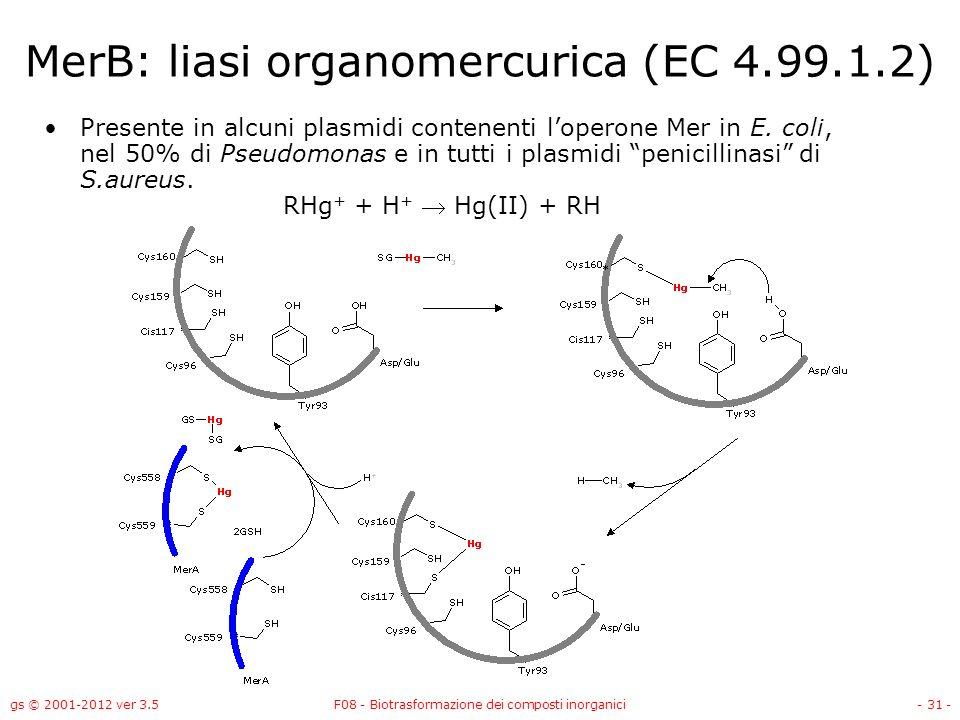 MerB: liasi organomercurica (EC 4.99.1.2)