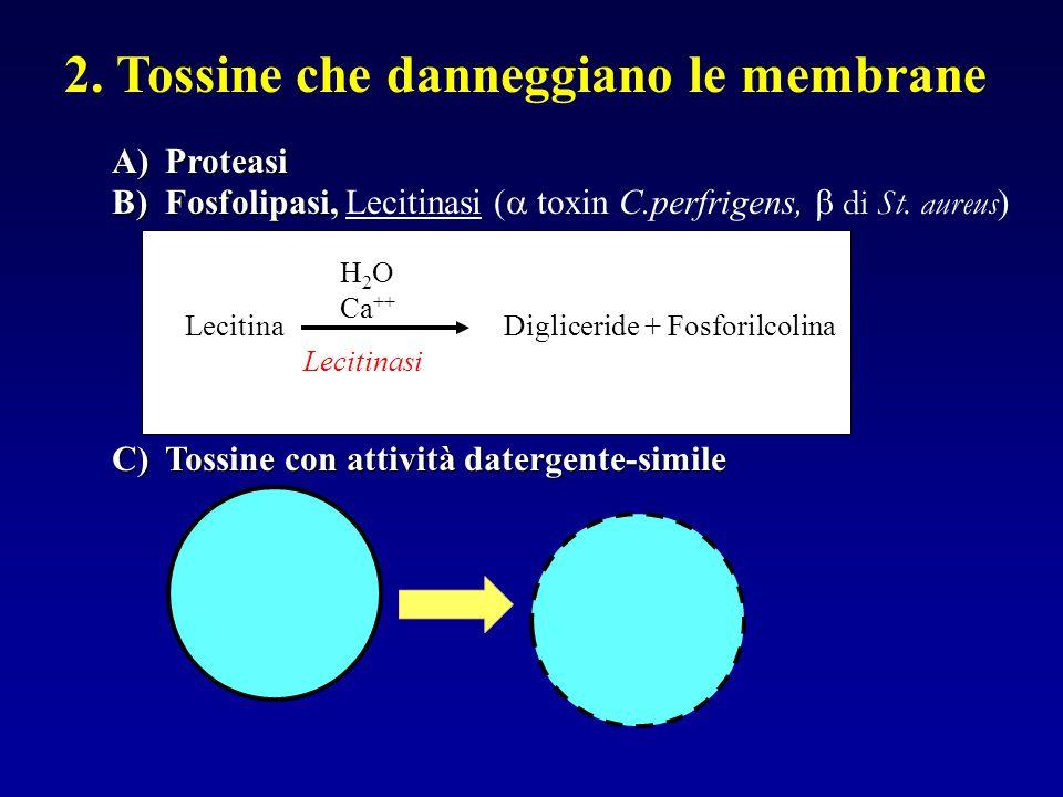 2. Tossine che danneggiano le membrane