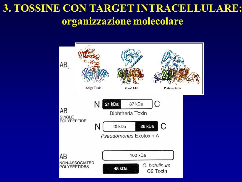 3. TOSSINE CON TARGET INTRACELLULARE: organizzazione molecolare