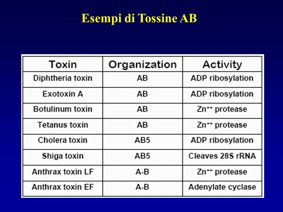 Esempi di Tossine AB
