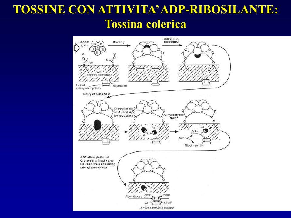 TOSSINE CON ATTIVITA' ADP-RIBOSILANTE: