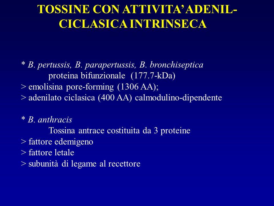 TOSSINE CON ATTIVITA' ADENIL-CICLASICA INTRINSECA