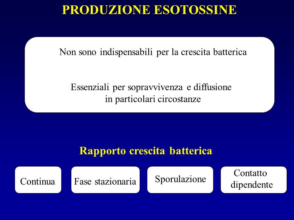 Rapporto crescita batterica
