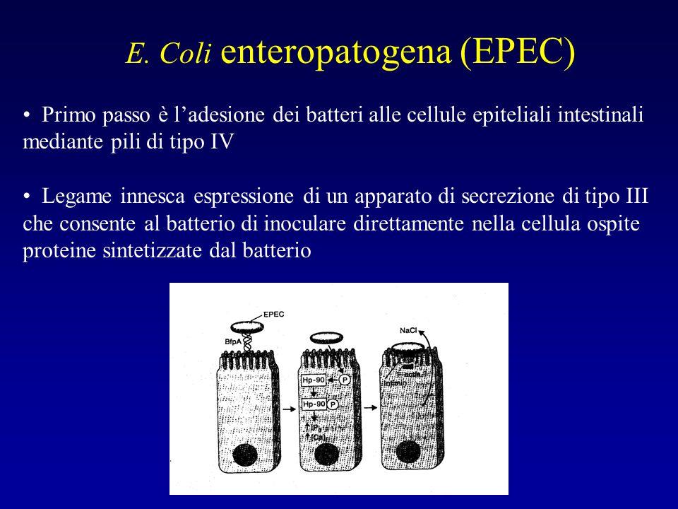 E. Coli enteropatogena (EPEC)