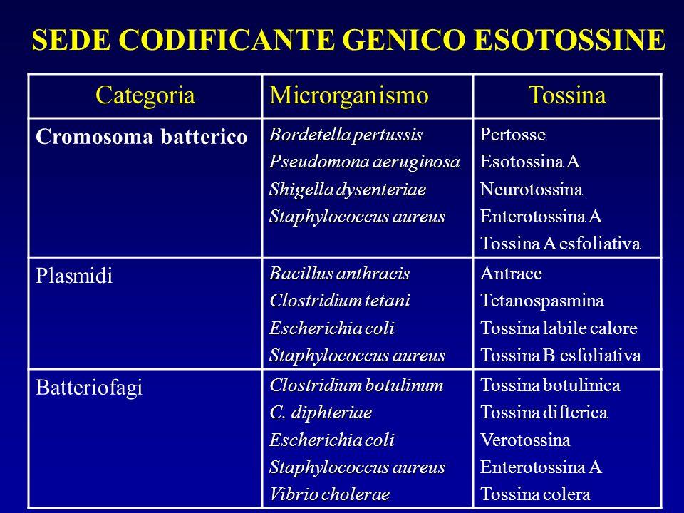 SEDE CODIFICANTE GENICO ESOTOSSINE