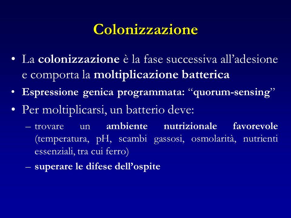 Colonizzazione La colonizzazione è la fase successiva all'adesione e comporta la moltiplicazione batterica.
