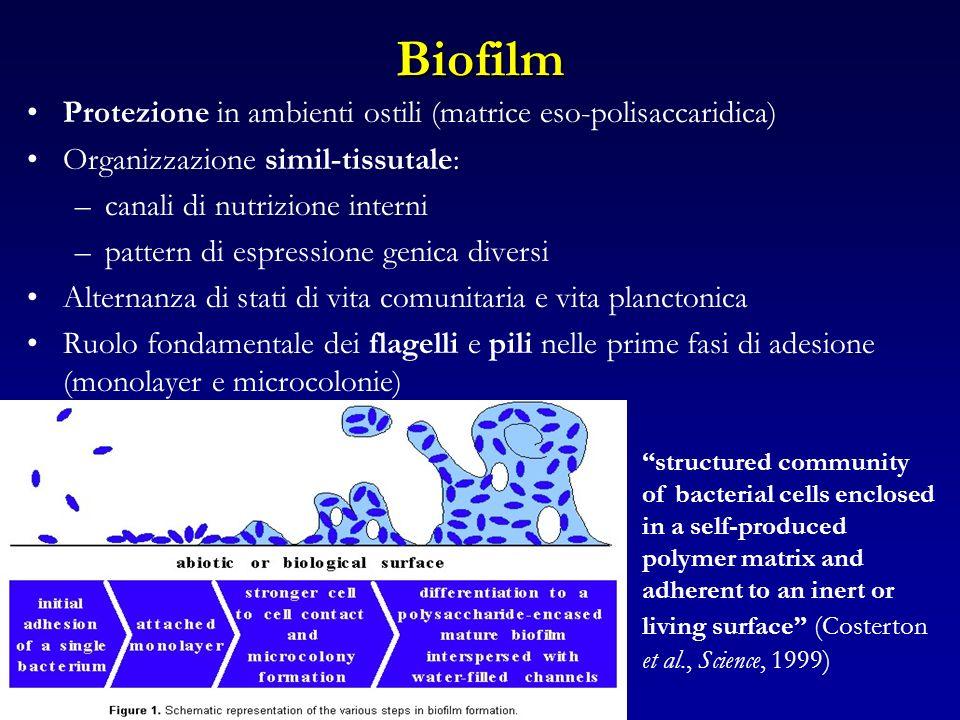 Biofilm Protezione in ambienti ostili (matrice eso-polisaccaridica)