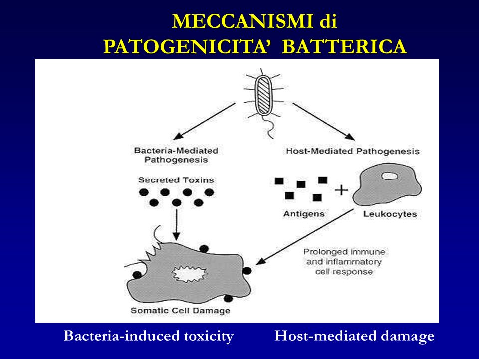 PATOGENICITA' BATTERICA