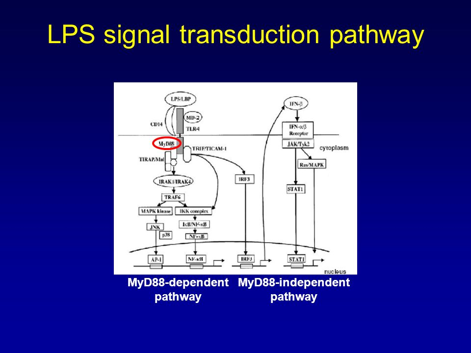 LPS signal transduction pathway
