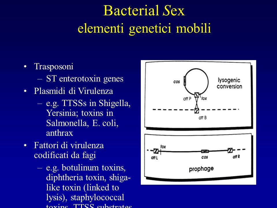 Bacterial Sex elementi genetici mobili