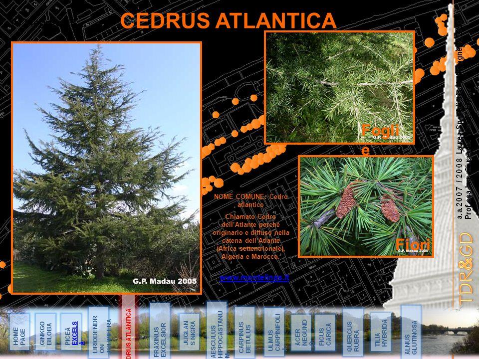 NOME COMUNE: Cedro atlantico