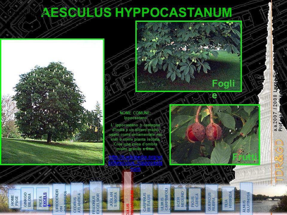 AESCULUS HYPPOCASTANUM NOME COMUNE: Ippocastano