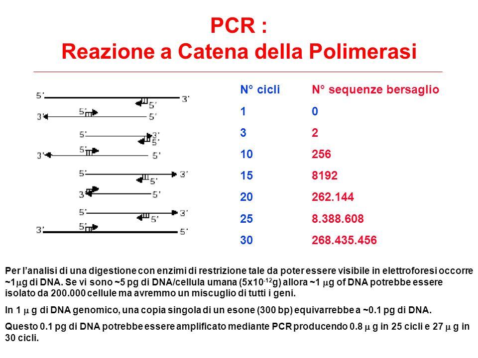 PCR : Reazione a Catena della Polimerasi