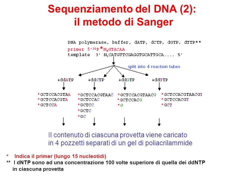 Sequenziamento del DNA (2): il metodo di Sanger