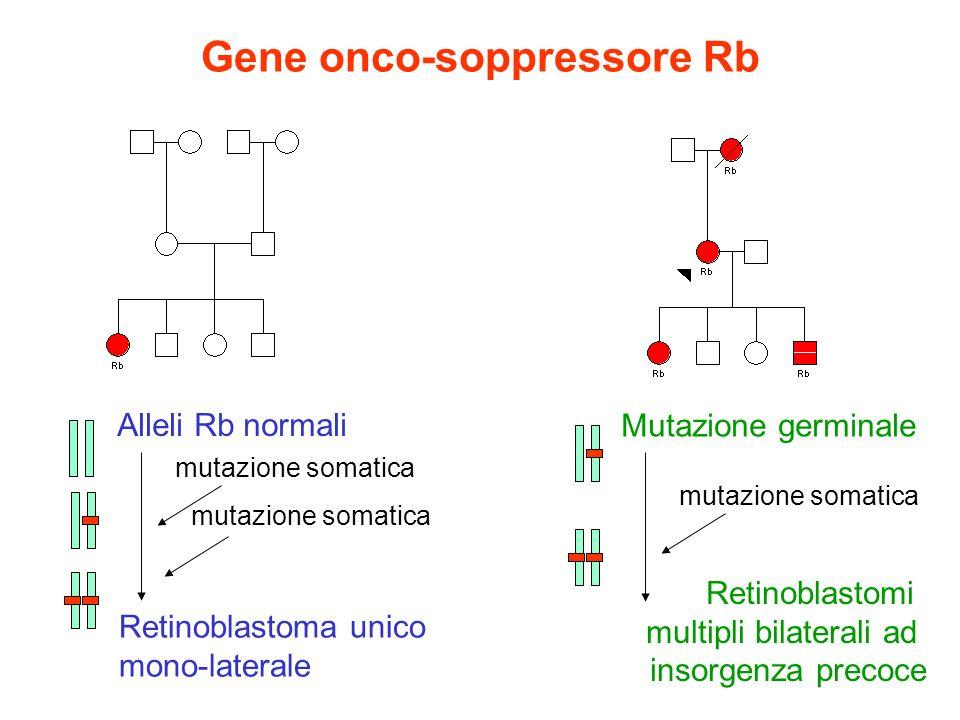 Gene onco-soppressore Rb