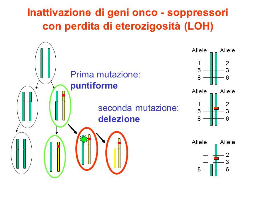 Inattivazione di geni onco - soppressori