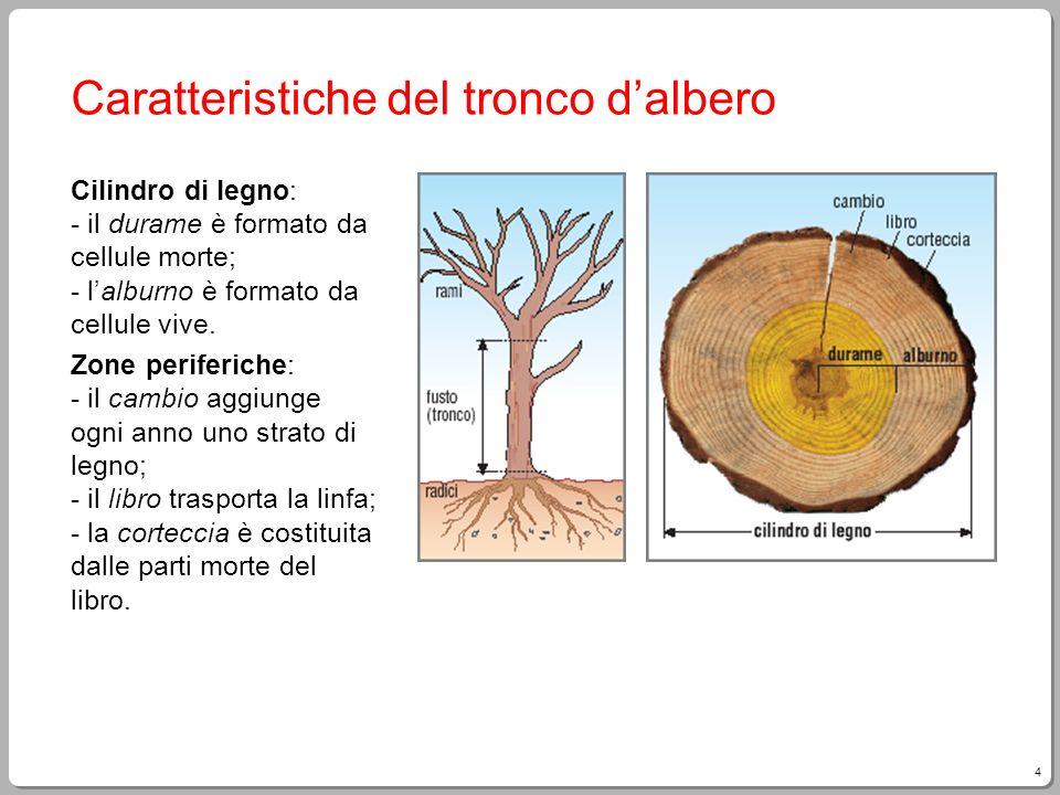 Caratteristiche del tronco d'albero
