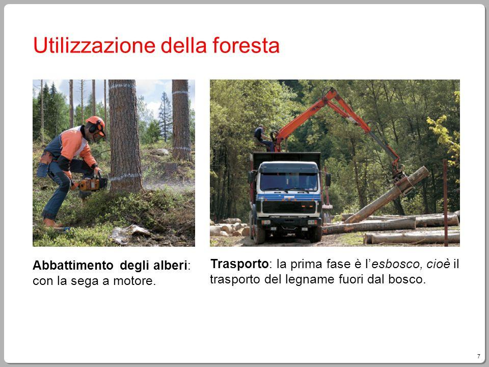 Utilizzazione della foresta