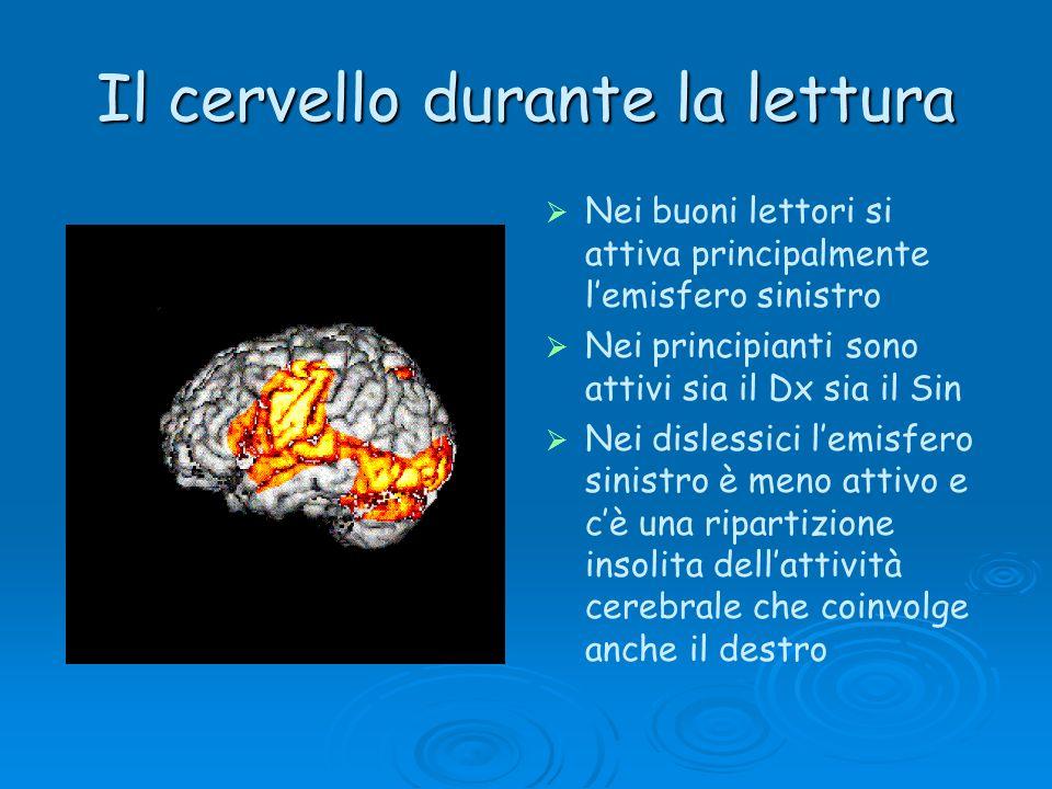 Il cervello durante la lettura