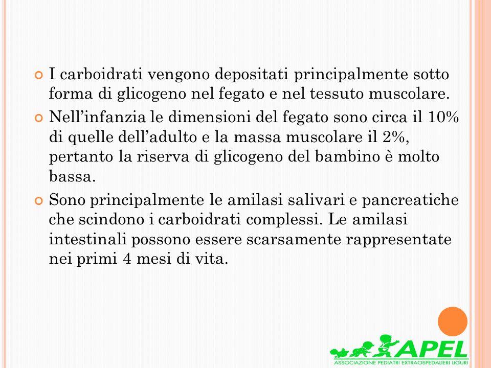 I carboidrati vengono depositati principalmente sotto forma di glicogeno nel fegato e nel tessuto muscolare.