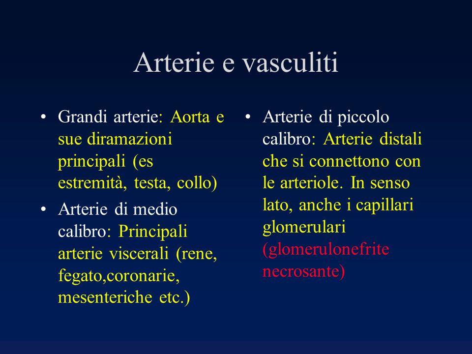 Arterie e vasculiti Grandi arterie: Aorta e sue diramazioni principali (es estremità, testa, collo)