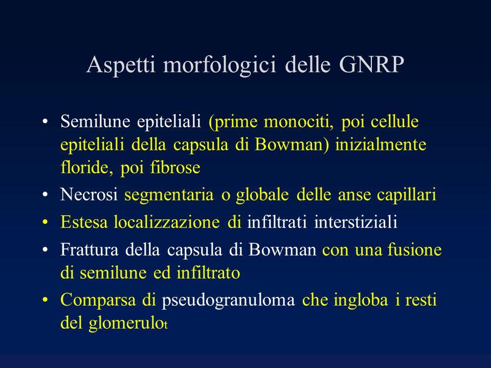 Aspetti morfologici delle GNRP