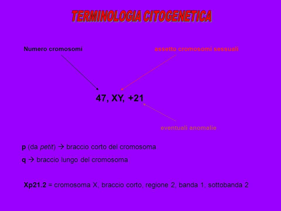 TERMINOLOGIA CITOGENETICA
