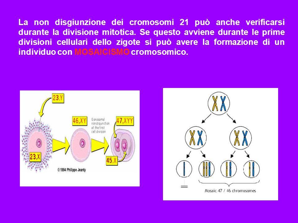 La non disgiunzione dei cromosomi 21 può anche verificarsi durante la divisione mitotica.
