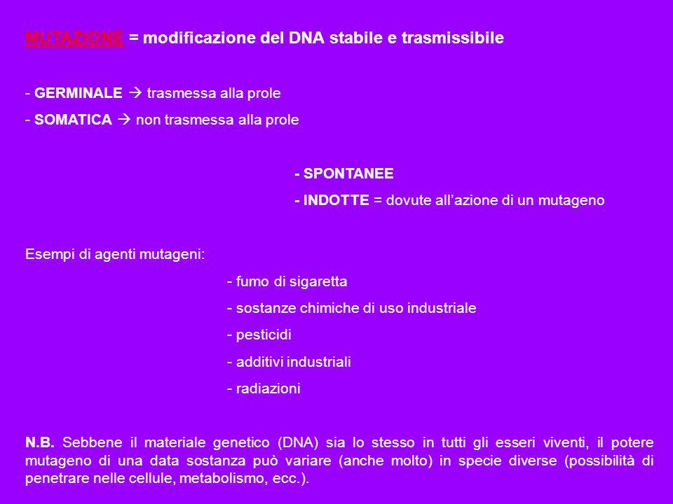 MUTAZIONE = modificazione del DNA stabile e trasmissibile
