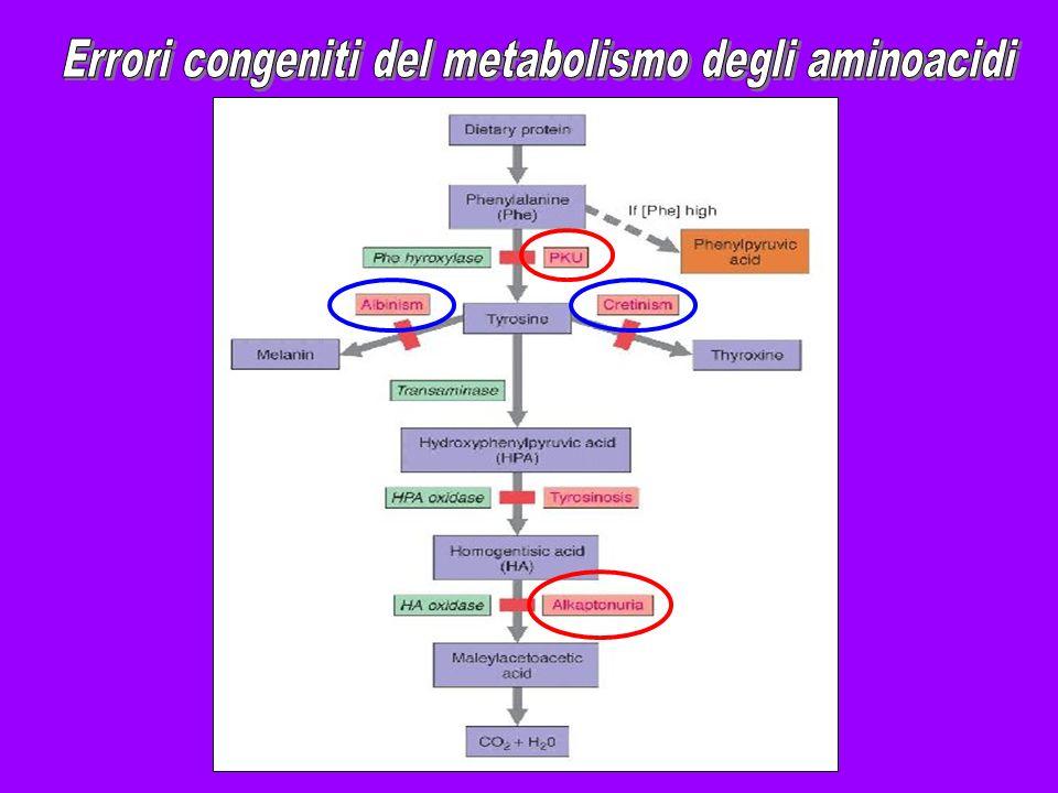 Errori congeniti del metabolismo degli aminoacidi