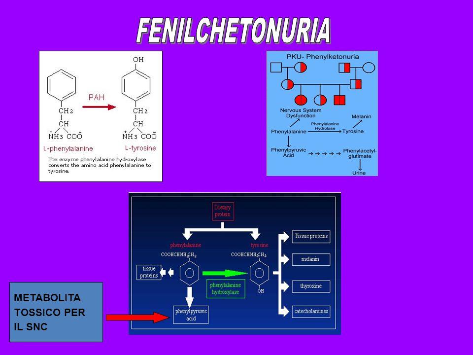 FENILCHETONURIA METABOLITA TOSSICO PER IL SNC