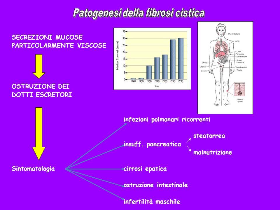 Patogenesi della fibrosi cistica