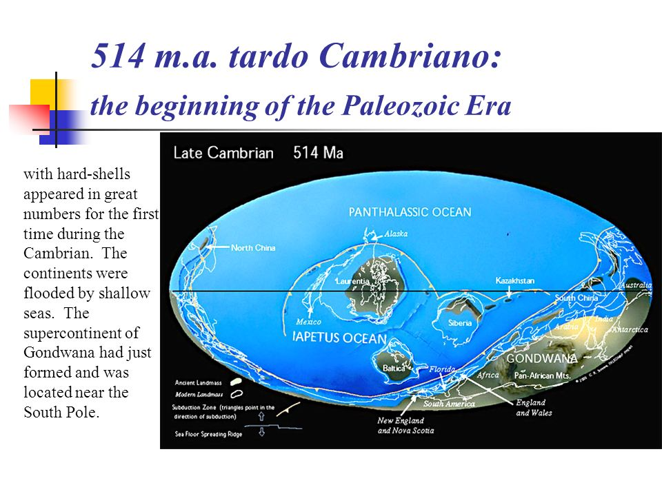 514 m.a. tardo Cambriano: the beginning of the Paleozoic Era
