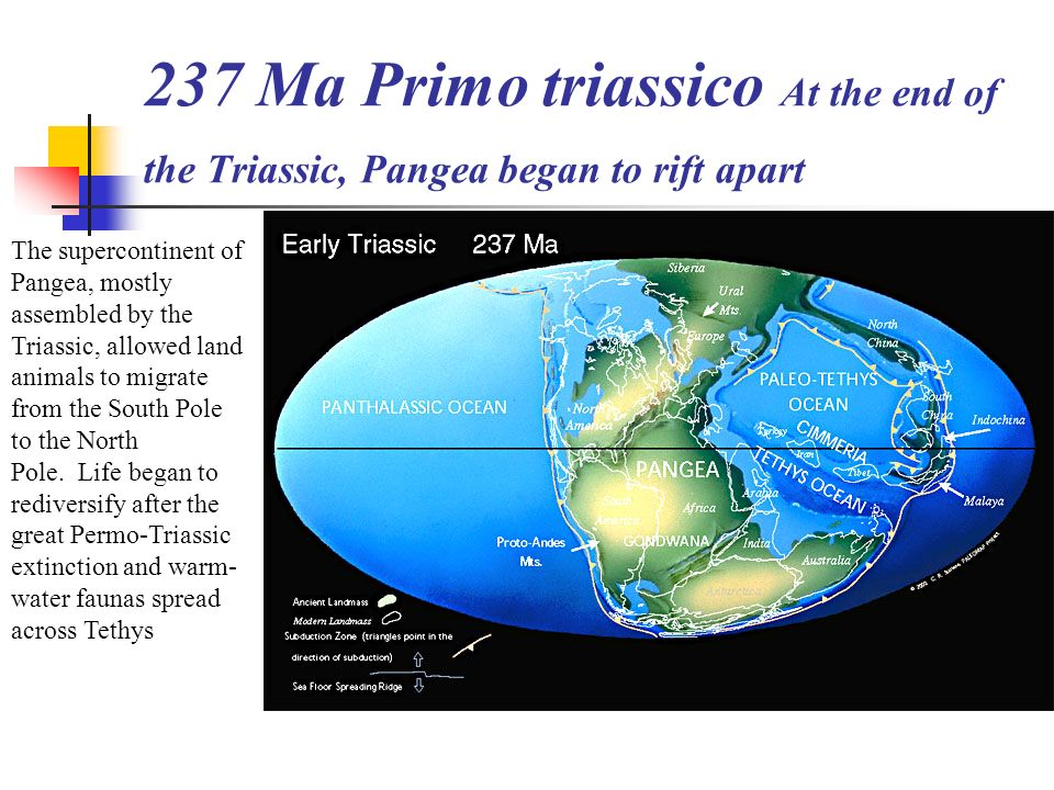 237 Ma Primo triassico At the end of the Triassic, Pangea began to rift apart