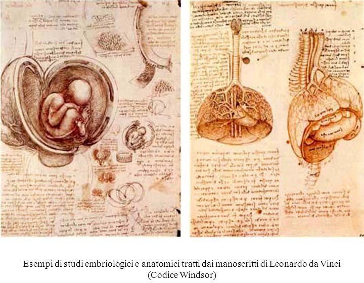 Esempi di studi embriologici e anatomici tratti dai manoscritti di Leonardo da Vinci