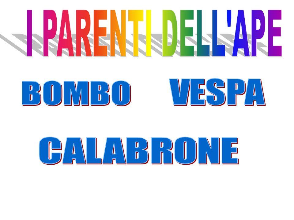 I PARENTI DELL APE VESPA BOMBO CALABRONE