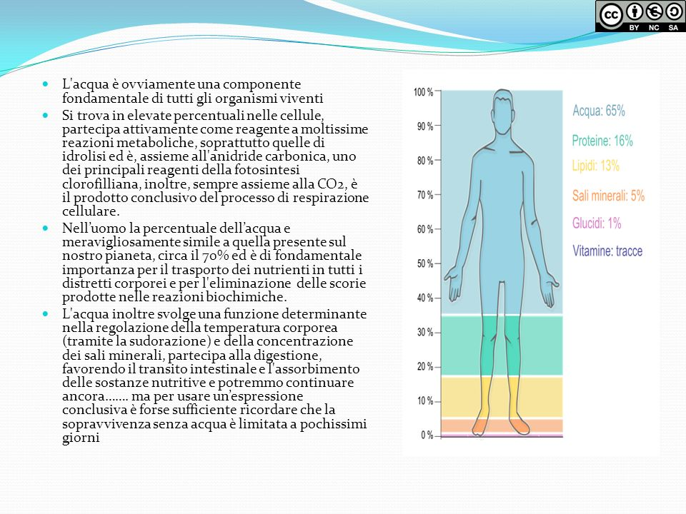 L acqua è ovviamente una componente fondamentale di tutti gli organismi viventi