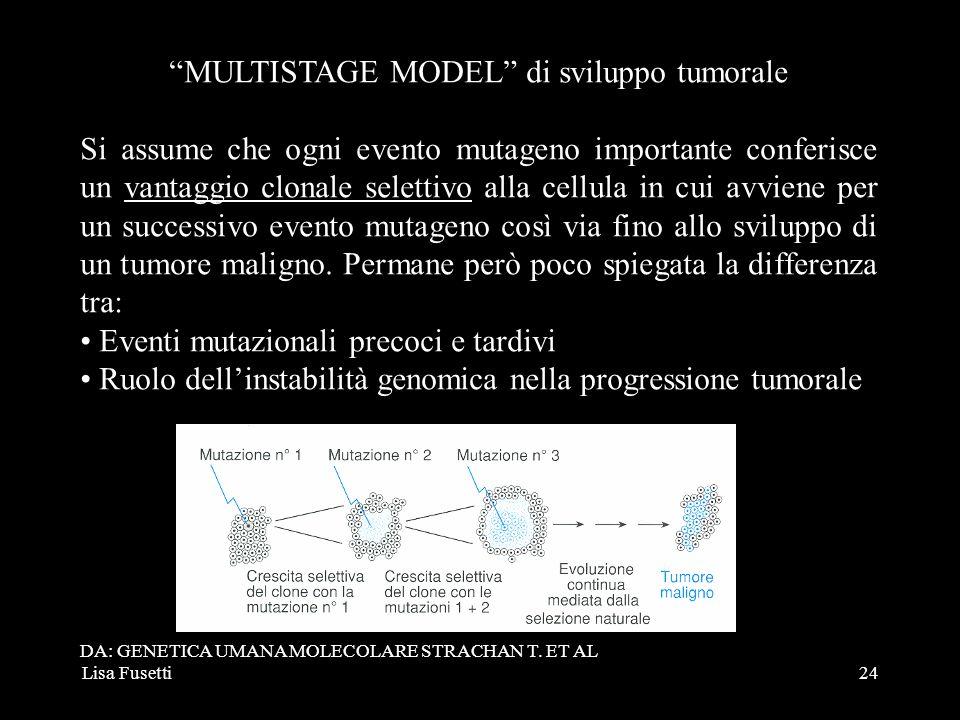 MULTISTAGE MODEL di sviluppo tumorale
