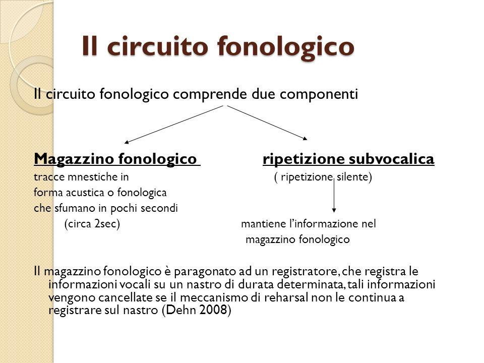 Il circuito fonologico