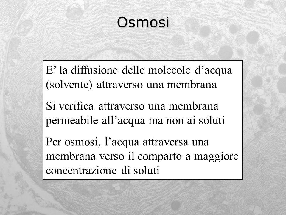 Osmosi E' la diffusione delle molecole d'acqua (solvente) attraverso una membrana.