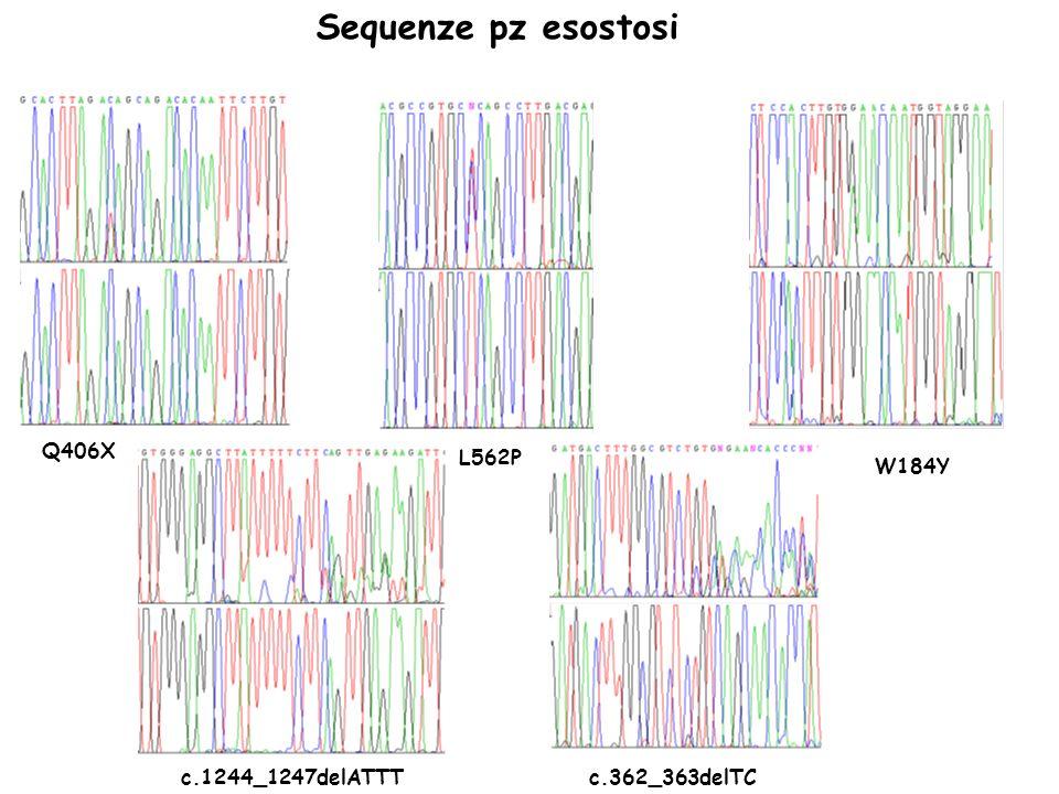 Sequenze pz esostosi Q406X L562P W184Y c.1244_1247delATTT