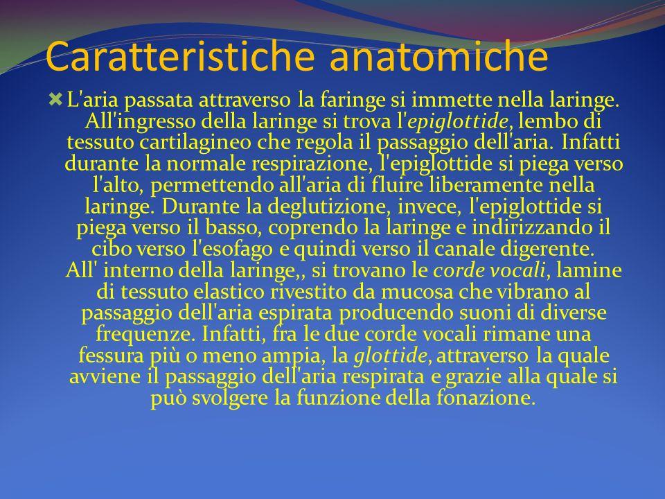 Caratteristiche anatomiche