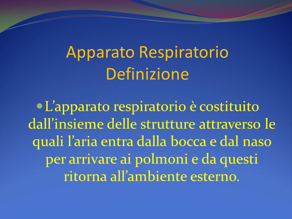 Apparato Respiratorio Definizione