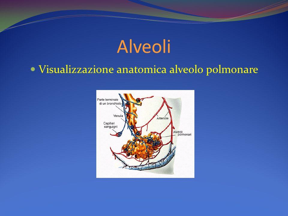 Visualizzazione anatomica alveolo polmonare