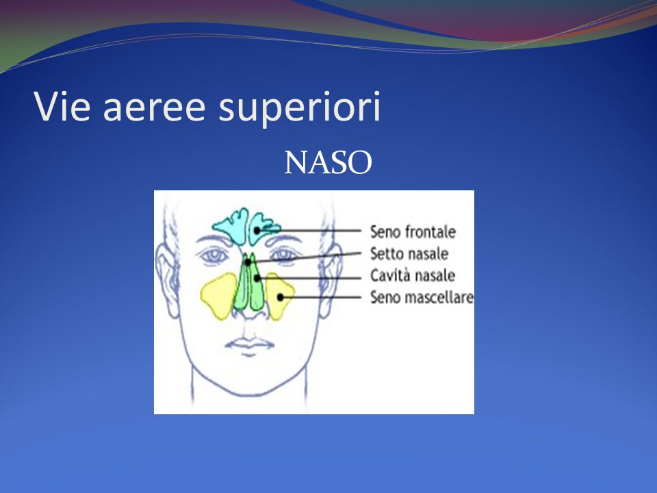 Vie aeree superiori NASO