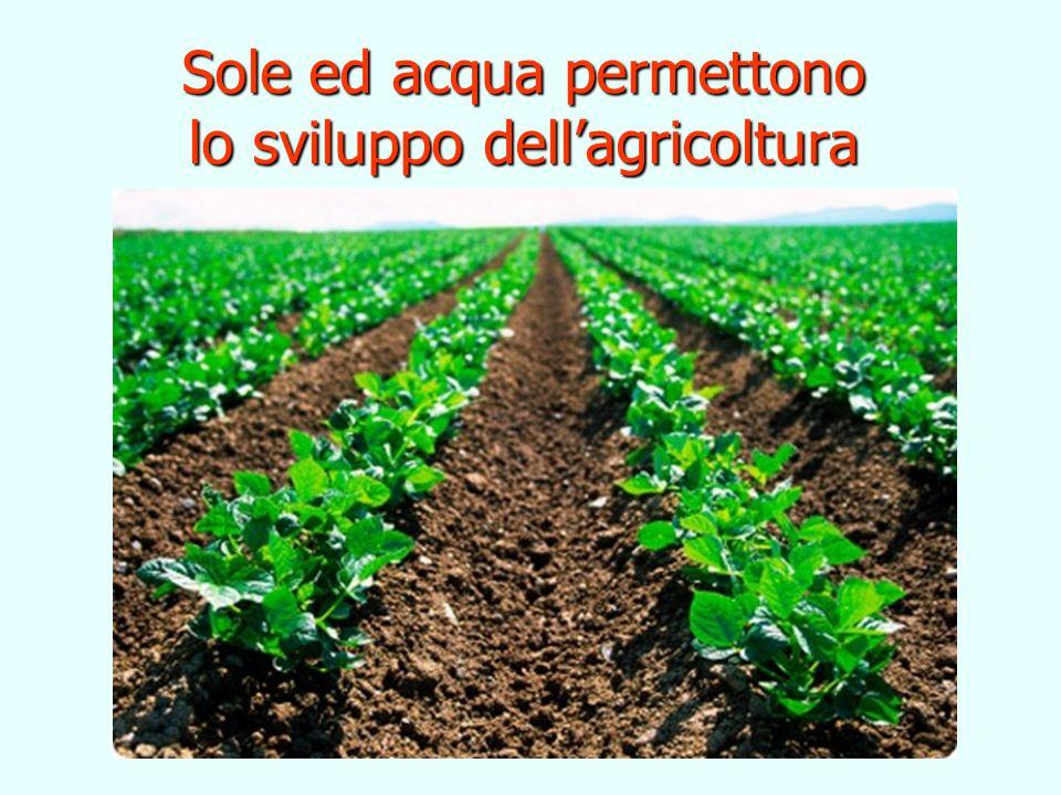 Sole ed acqua permettono lo sviluppo dell'agricoltura