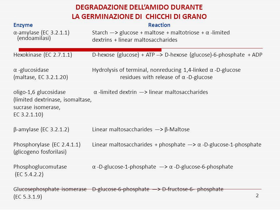 DEGRADAZIONE DELL'AMIDO DURANTE LA GERMINAZIONE DI CHICCHI DI GRANO